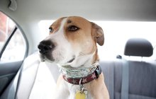 10 rad na cestu se zvířetem! I pes musí mít svůj pas!