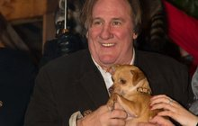 Dobře živený Gérard Depardieu k pejskovi: A tebe si nechám jako zákusek!