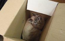 13 koček obsadilo byt: Novému majiteli odmítly ustoupit a bojovaly!