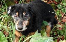 Za 4 dny čekala psího seniora eutanazie pro nadbytečnost: Křížence neuspí!