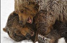 Medvědí souboj v těžké váze: Kdo je tady zlý GRRRizly?!