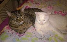 Monty a Nelly