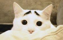 Neujstaranější kočka světa: Lidé se o ni perou, nabízejí velké peníze!