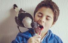 Rodina se ujala opuštěného mláděte flétňáka: Jak se jim odvděčil?