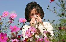 Alergikům začaly krušné časy: Pyly útočí!