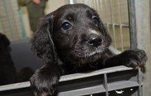 Čtenáři Aha! mají velké srdce: Chtěli pomoci 5 štěňátkům, ale… Dali domov 20 psům!