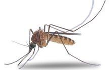 Komáři ve vodě z kohoutku!