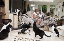 Žena má doma 122 koček: Ročně za ně utratí 4 miliony