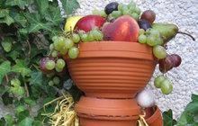 Využijte květináče podle Jitky (52) ze Strakonic: Jako misku na sezónní ovoce!