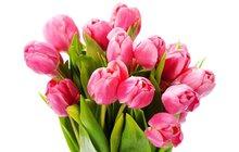 Květiny pro lepší náladu i proti strachu. Víte, jaké jsou podle feng shui nejvhodnější?