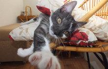 Hledá se Kočka Česka 2015: Hrajte o 60 tisíc!