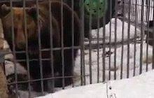 Rus chtěl pohladit medvěda... Uhryzl mu ruku!
