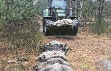 Vlčí masakr: O úplňku roztrhali 65 ovcí a koz!