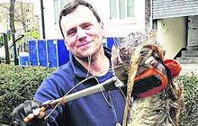 Chlapík v Londýně chytil gigantickou krysu: Tahle bestie váží 11 kg a měří 1,2 metru!