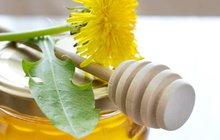 Pampelišky na trávníku často nepotěší, zato v kuchyni zazáří: Plevel nebo pomocník?