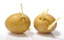 Jak »omladit« brambory?