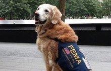 Zemřel poslední pes z 11. září! Na selhání ledvin!