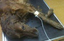 Tyran popíjel, pes umíral!