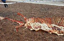 Strašidelný nález: Jsou to ostatky mrtvé lochnesky?