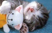 Chlupaté pomazlení! Nejroztomilejší galerie kočičích rodinek!