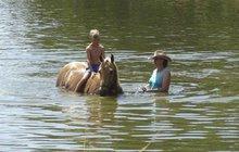 Pohlreichovi si rozdělili role: Jeden maká, druhý plaví koně!