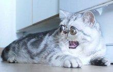 Neskutečné! Nejvykulenější kočka na světě!
