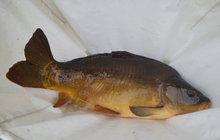 Ryb sníme jen 5,5 kg! Mělo by to být 21 kilogramů...