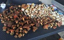 Kapitální úlovek: Z lesa přinesli 400 hub!