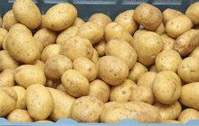 Velké srovnání českých a polských brambor: Proč jsou zahraniční levnější?