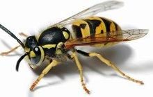 Alergika v lese napadly vosy: Byl krůček od smrti!