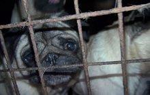 Šokující snímky chovu papírových psů: MNOŽÍRNA?!