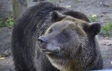 Opilci vlezli k medvědům!