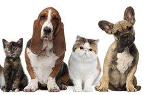 Světový den zvířat: Pes z útulku! Ano, či ne?