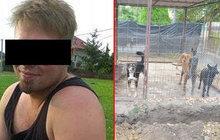 Chlapec (†5) zardoušený psí smečkou: Odpovědnost nese chovatel, ale i otec dítěte!
