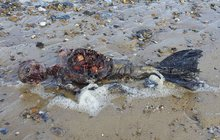 Nález tajuplných ostatků na britské pláži: Mrtvý tuleň, nebo...