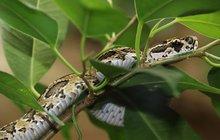 Rarita v plzeňské zoo: Tohle je hadí zabiják!