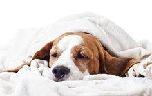 RÁDCE AHA! Nemoci psů z nachlazení: Jak to řešit?!