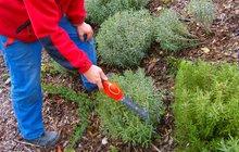 Podzim na zahradě: Na zazimování je ještě chvíli čas, co teď se záhonky?