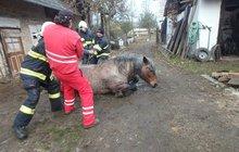 Kůň uvízl v jímce!