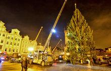 Strom už zdobí Prahu!