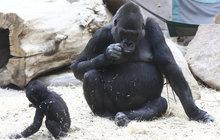 Drsná máma Shinda: Ajabu hlady žužlal »dudlík«!