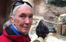 Ta, která rozumí »řeči« šimpanzů!