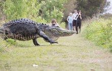 Z močálu na Floridě vylezl »dinosaurus«!