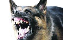 Pobodal jí psa nožem, odpovědnost nese majitelka!