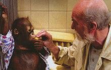 Orangutan Ňuňák zemřel na rakovinu a není výjimka: Jakými lidskými neduhy zvířata trpí?