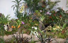 Krása, která bere dech: »Divoké« orchideje!
