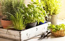 Léčivé byliny pomohou vašemu tělu i kapse: Nasušte si zdraví!