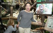 Issová slavila orangutaní narozeniny: Kdo má větší pusu?