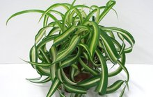 Stres i únavu přeperou rostliny!
