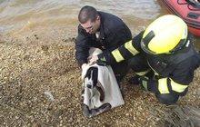 Hasiči lovili z jezera omráčeného psa!